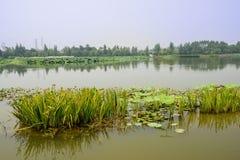 Estações de tratamento de água no lago no dia de verão ensolarado Imagem de Stock Royalty Free