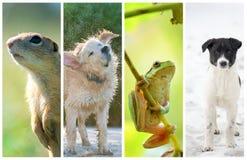Estações diferentes do ano Conceito do ciclo de vida Fotos de Stock Royalty Free