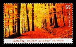 Estações - floresta do outono, serie, cerca de 2006 Foto de Stock