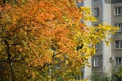 Estações na cidade verão, outono, inverno Fotos de Stock
