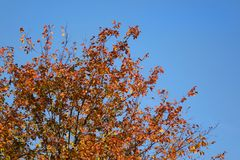 Estações na cidade verão, outono, inverno Fotografia de Stock Royalty Free