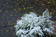 Estações na cidade verão, outono, inverno Foto de Stock
