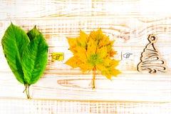 Estações: verão, outono, inverno Fotografia de Stock Royalty Free