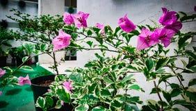 Esta é flor do beatifull fotos de stock royalty free