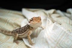 Esta é minha cama agora Imagem de Stock Royalty Free