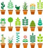 Grupo de plantas feitas sob medida em um potenciômetro Fotos de Stock Royalty Free