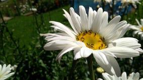 Esta é uma flor natural imagem de stock royalty free