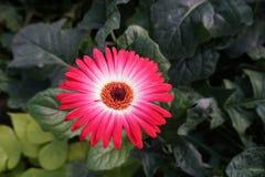 Esta é uma flor no parque fotografia de stock