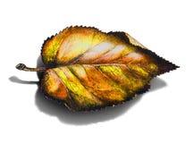 Esta é uma folha colorida do outono com sombra ilustração do vetor