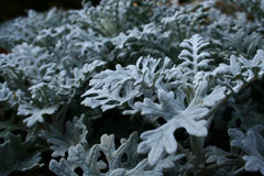 Planta branca Imagens de Stock