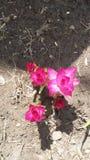 Esta flor cogió mi ojo fotos de archivo