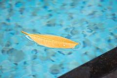 Esta hoja agradable que flota en la superficie de la piscina está derivando alrededor en el viento con la libertad absoluta, enci fotografía de archivo libre de regalías