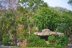 Esta imagem é sobre animais calosos tailandeses, Banguecoque Tailândia Fotografia de Stock