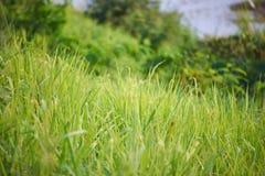 Esta imagem é sobre animais calosos tailandeses, Banguecoque Tailândia Foto de Stock