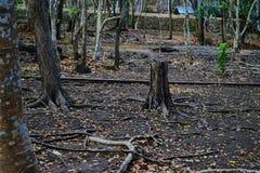 Esta imagem é sobre a floresta, Tailândia Foto de Stock