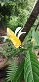 Esta imagem natural wield a flor amarela foto de stock royalty free