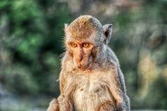 Esta imagen única muestra los monos salvajes en la oscuridad en la roca del mono en Hua Hin en Tailandia foto de archivo