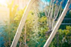 Esta mañana el reflejo de la luz del sol en el musgo español Imagen de archivo libre de regalías
