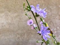 Esta manhã eu recolhi um ramalhete bonito de flores da montanha, mim aprecio sua beleza imagem de stock