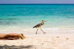 Esta praia é MINHA!!! Imagem de Stock