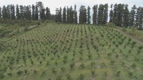 Establecimiento agrícola en la ladera georgia