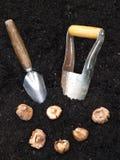 Establecimiento de bulbos Foto de archivo