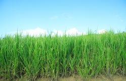 Establecimiento de la hierba Fotos de archivo