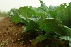 Establecimiento de la planta verde joven Fotos de archivo