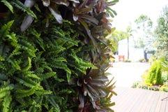 Establecimiento de las flores, de las hierbas y de las verduras como jardín vertical imagen de archivo libre de regalías