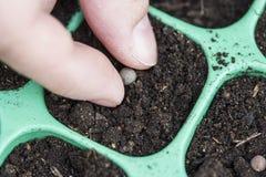 Establecimiento de las semillas Fotografía de archivo