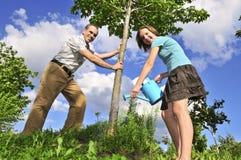 Establecimiento de un árbol Foto de archivo