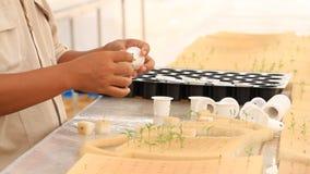 Establecimiento de un almácigo de la verdura del hidrocultivo Fotos de archivo libres de regalías