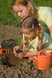 Establecimiento de una planta de semillero del tomate en el jardín Fotografía de archivo libre de regalías