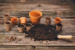 Establecimiento de una planta en conserva en fondo de madera natural en jardín Imagenes de archivo