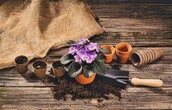 Establecimiento de una planta en conserva en fondo de madera natural en jardín Imagen de archivo