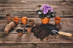 Establecimiento de una planta en conserva en fondo de madera natural en jardín Foto de archivo