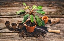 Establecimiento de una planta en conserva en fondo de madera natural en jardín Fotos de archivo libres de regalías