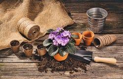 Establecimiento de una planta en conserva en fondo de madera natural en jardín Fotos de archivo