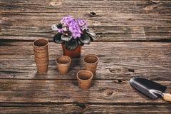 Establecimiento de una planta en conserva en fondo de madera natural en jardín Foto de archivo libre de regalías
