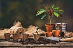 Establecimiento de una planta en conserva en fondo de madera natural en jardín Fotografía de archivo libre de regalías