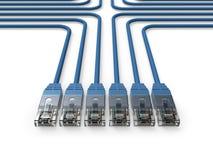 Establecimiento de una red, cables de la red, cables de LAN Imagen de archivo libre de regalías