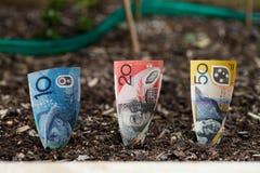Establecimiento del dinero australiano en cama del jardín Imagenes de archivo