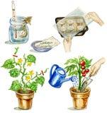 Establecimiento del tomate stock de ilustración