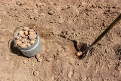 Establecimiento manual de patatas foto de archivo libre de regalías