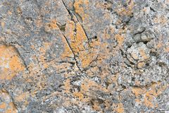 Established limestone boulder rock face with lichen. Established limestone boulder rock face with yellow and grey lichen stock photography