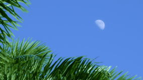 Establishing shoot from a caribbean blue sky with a visible half moon during midday stock video