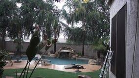 Establishing Shot of Residential Arizona Backyard Pool in a Monsoon. A daytime establishing shot of an Arizona residence backyard pool in a monsoon or rain storm stock footage
