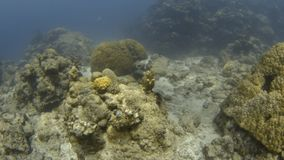 Fish eye effect underwater. An establishing shot underwater with the use of a fish eye lens. Small fishes and coral reefs are in the shallows stock footage
