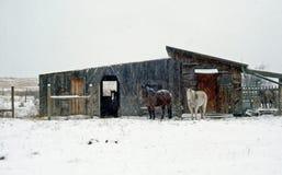 Establo y caballos del invierno Imagen de archivo libre de regalías