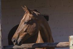Establos del caballo Fotografía de archivo